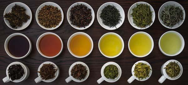 các loại trà cơ bản