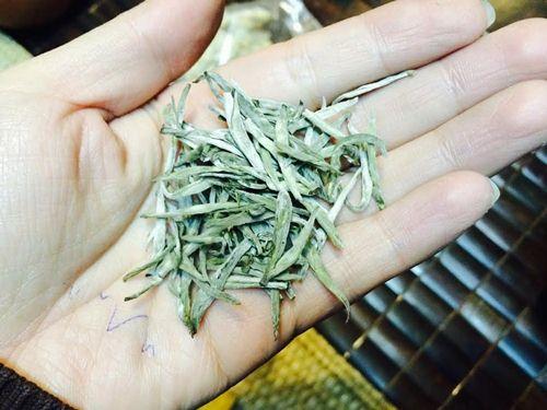 hita chay bach tra la gi 1 1 Bạch trà là gì và những công dụng tuyệt vời không phải ai cũng biết