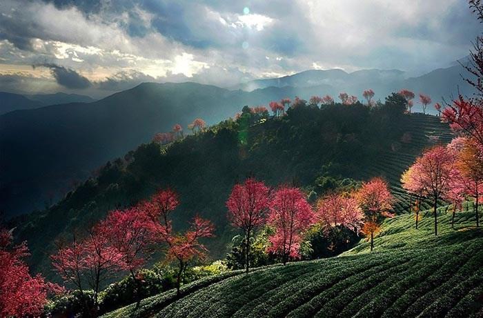 văn hóa trà việt luôn có nét đẹp riêng