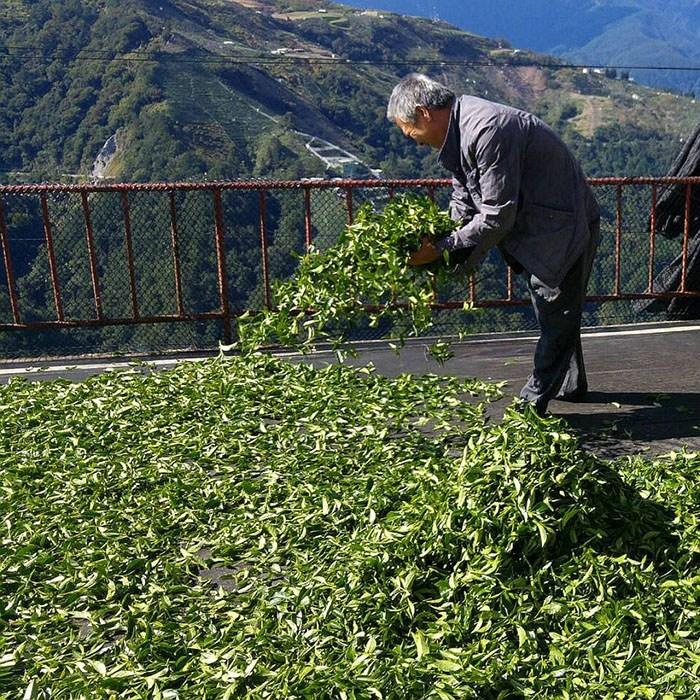 nguồn gốc của trà thiết quan âm thanh hương