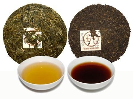 phan biet tra pho nhi song va chin Cách lựa chọn trà phổ nhĩ ngon và không bị nấm mốc