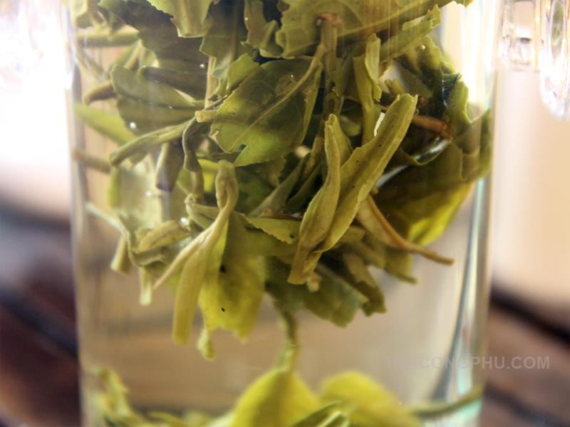 cách pha trà long tỉnh