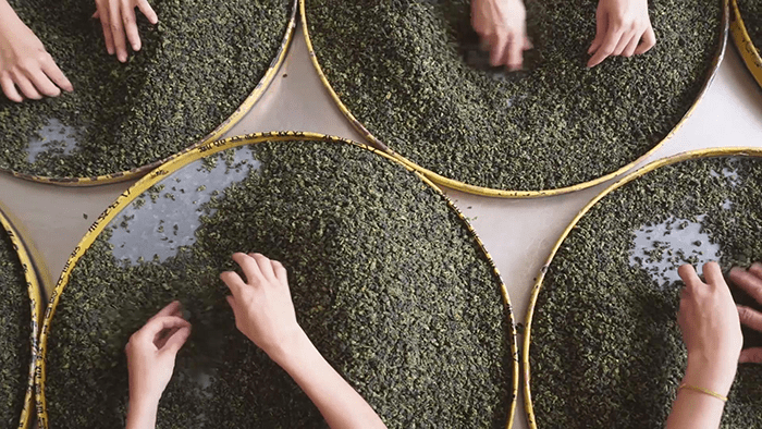 trà thiết quan âm trần hương