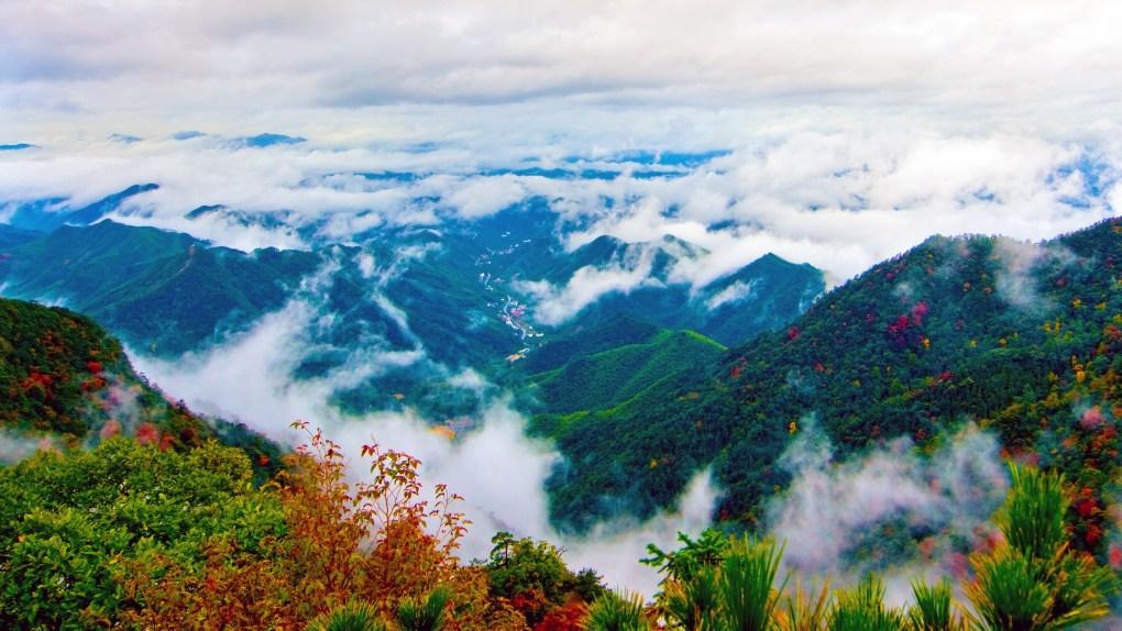 trà trắng an huy được trông tại núi thiên mục