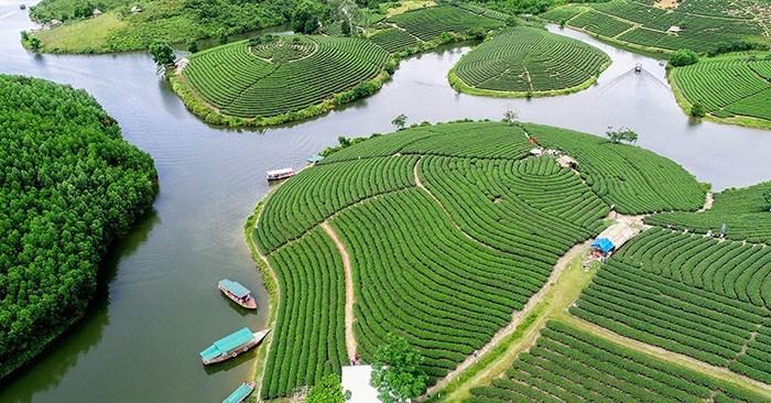 văn hóa trà việt trải dài khắp vùng miền việt nam