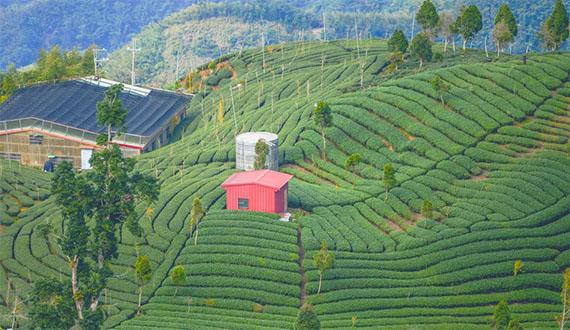 Những truyền thuyết Phật giáo và trà
